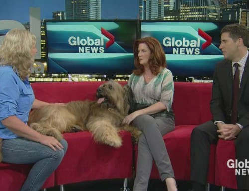 Bonnie and Ruckus on Global TV with Lynn Collier & Jay Durant