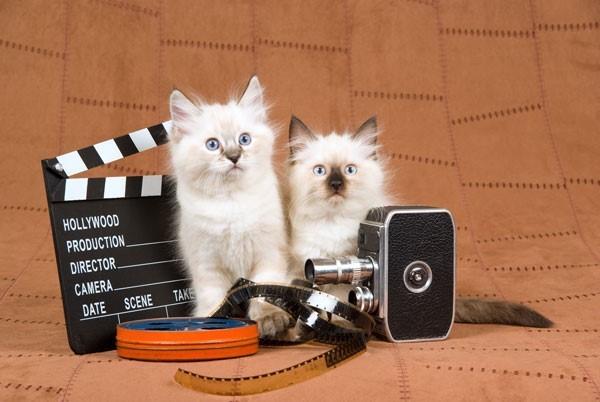 Film Animal Training / Wrangling with Bonnie Judd